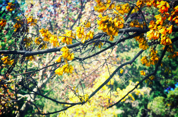 Gorgeous Yellow Tree Thing