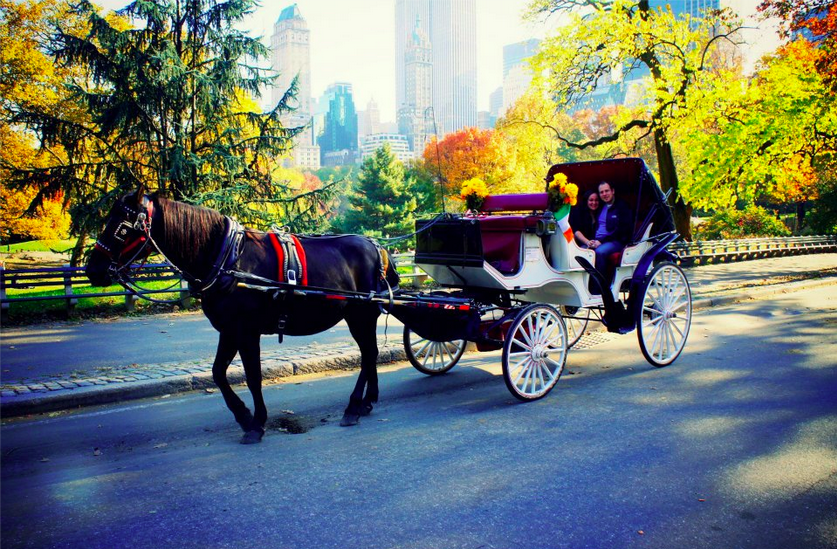 NYC autumn central park
