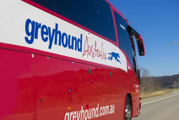 greyhound australia review
