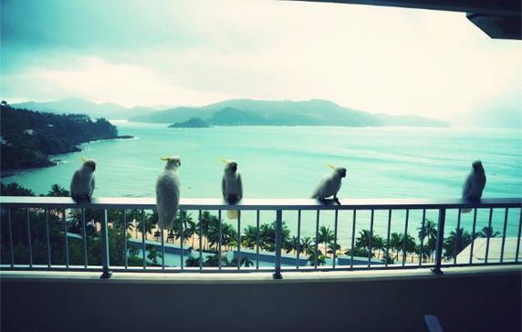 hamilton island parrots birds view reef hotel