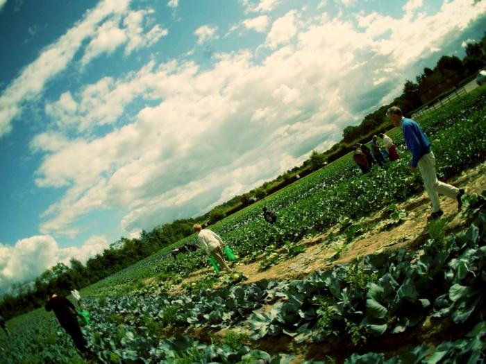 Garsons farm London