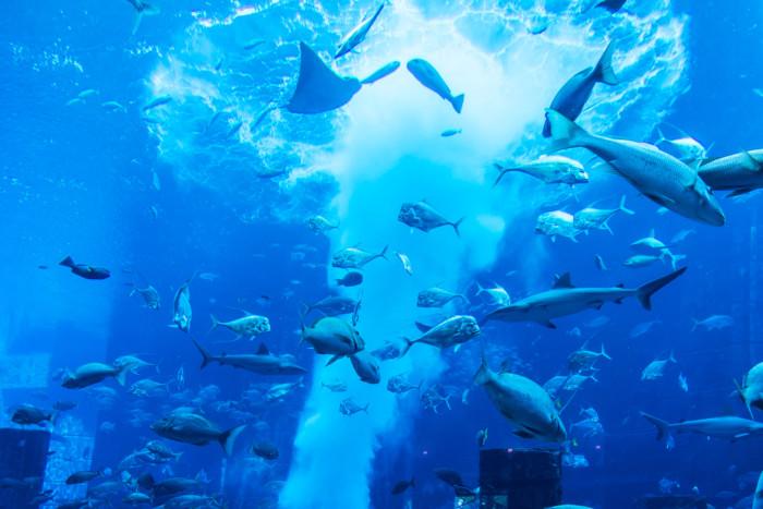 underwater hotel neptune suite dubai