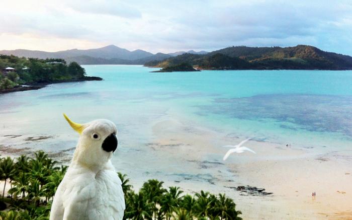 hamilton island FAQs