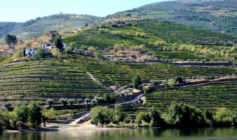 Stepped Douro Vineyards