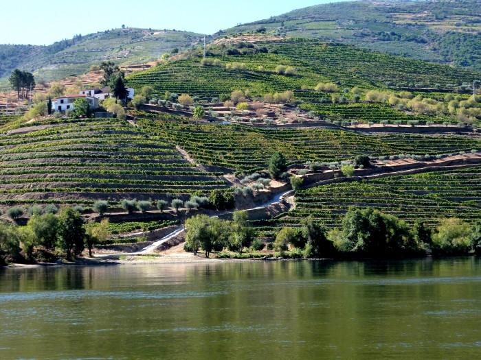 Stepped Douro Vineyards
