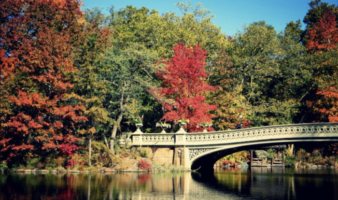 The Best Central Park Photo Spots in nyc