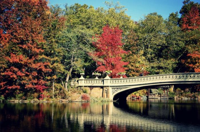 The Best Central Park tours 4