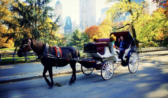 The Best Central Park tours 5