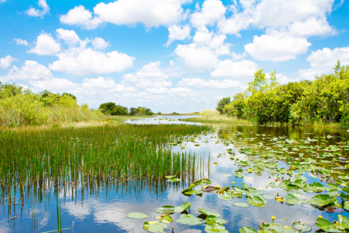 best way to see the everglades.