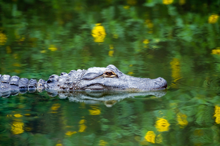 what is the best way to see the everglades