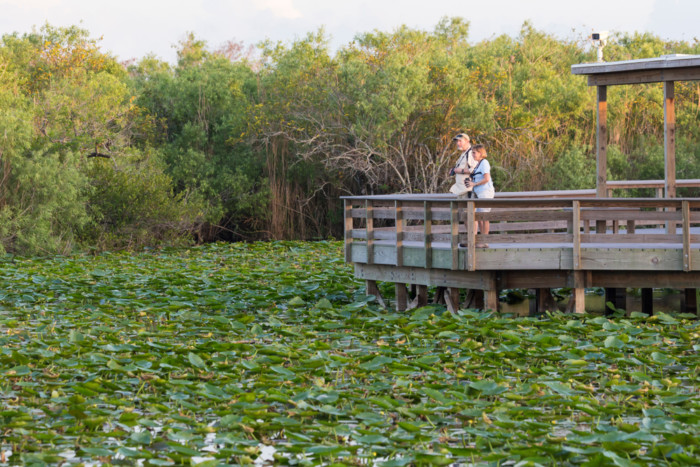 best way to see the everglades usa