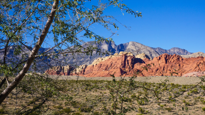 things to do in Las Vegas during the day red rock canyon