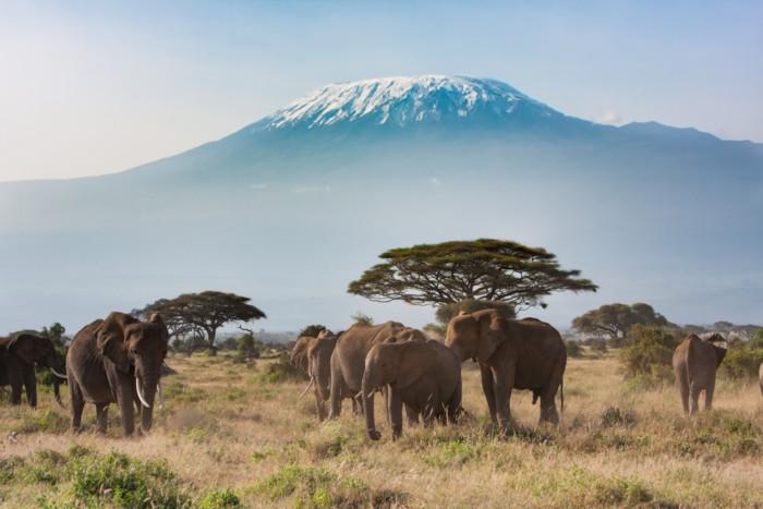 Planning A Trip To Kilimanjaro