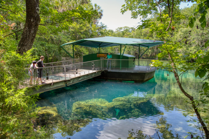 Best-Places-to-See-Manatees-in-Florida-usa