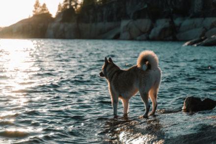 dog friendly beaches lake tahoe