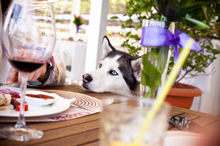 top dog friendly restaurants in Orlando