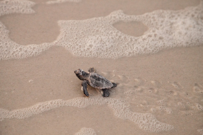 best places to see turtles nesting in the USA