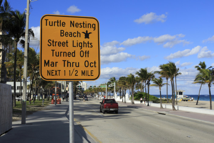 turtles nesting in the USA tips