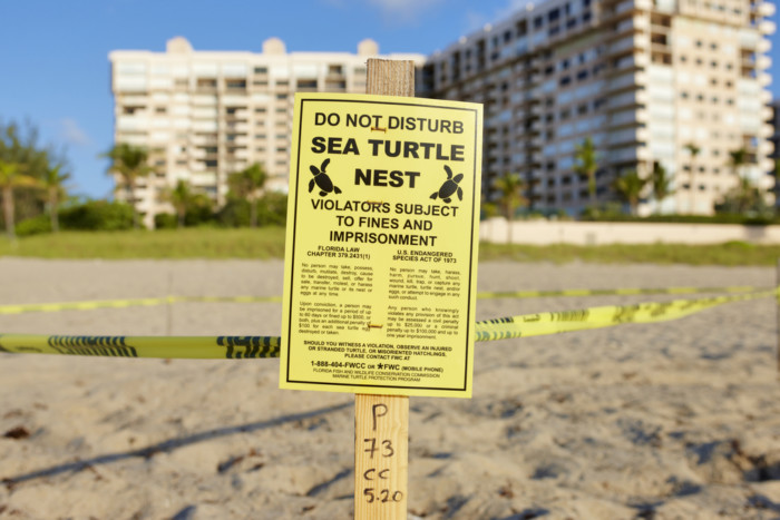 where can i see turtles nesting in the USA