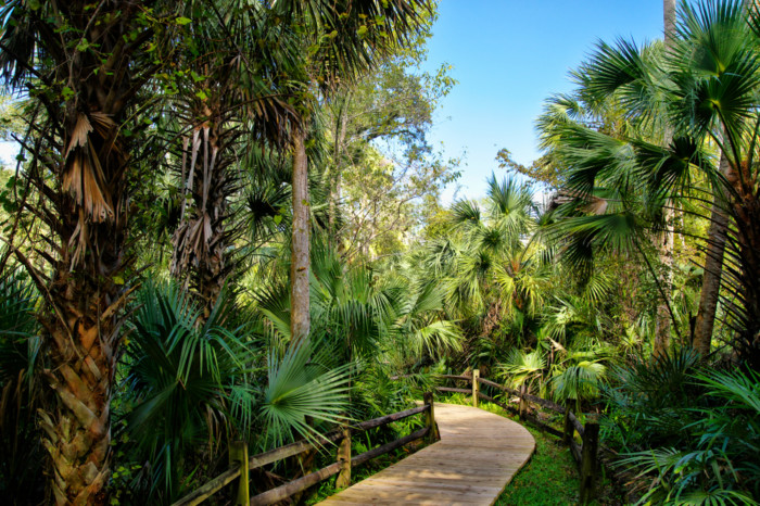 Wooden,Boardwalk,In,The,Recreation,Area,In,The,Ocala,National