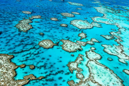 The,Great,Barrier,Reef,In,Queensland,,Australia.