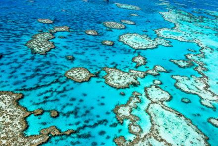 The,Great,Barrier,Reef,In,Queensland,,Australia.