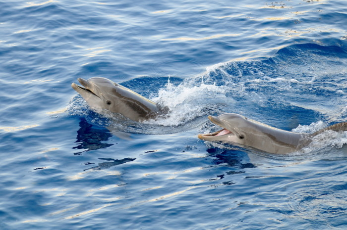 best places to swim with dolphins in Florida!