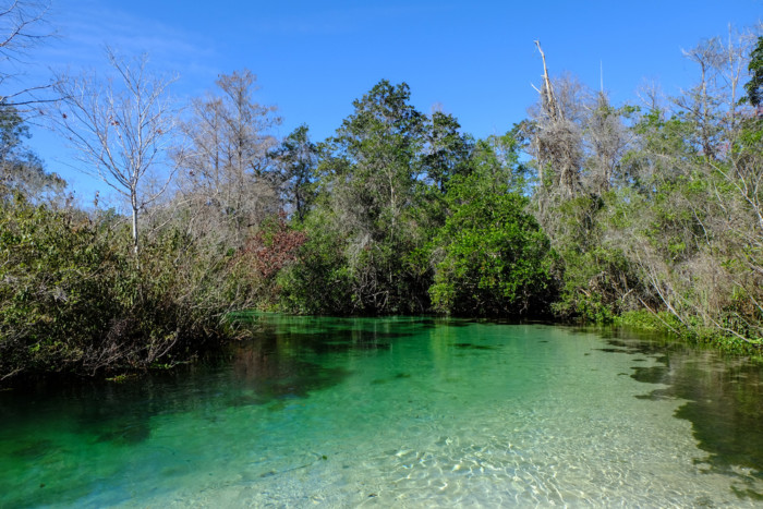 Kayaking,Weeki,Wachee,Springs,In,Florida,With,Clear,Water,And