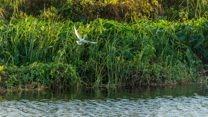 An,Egret,Along,The,Loxahatchee,Road,Boat,Ramp,In,Parkland,