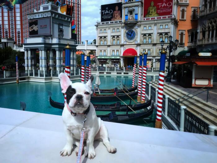 pet friendly hotels in Las Vegas