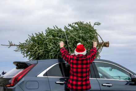 the best Christmas tree farms in New York
